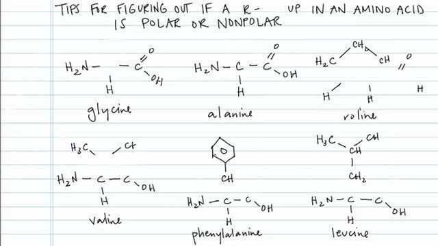 Determining if a R-Group in an Amino Acid Is Polar or Nonpolar