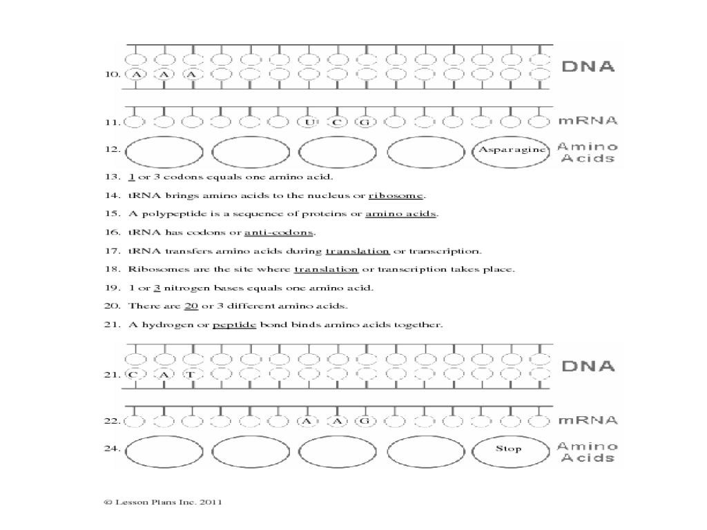 Protein Synthesis Translation Worksheet Answer Key ...