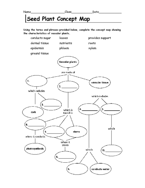 Printables Skills Worksheet Concept Mapping parts of a seed first grade subulussalam
