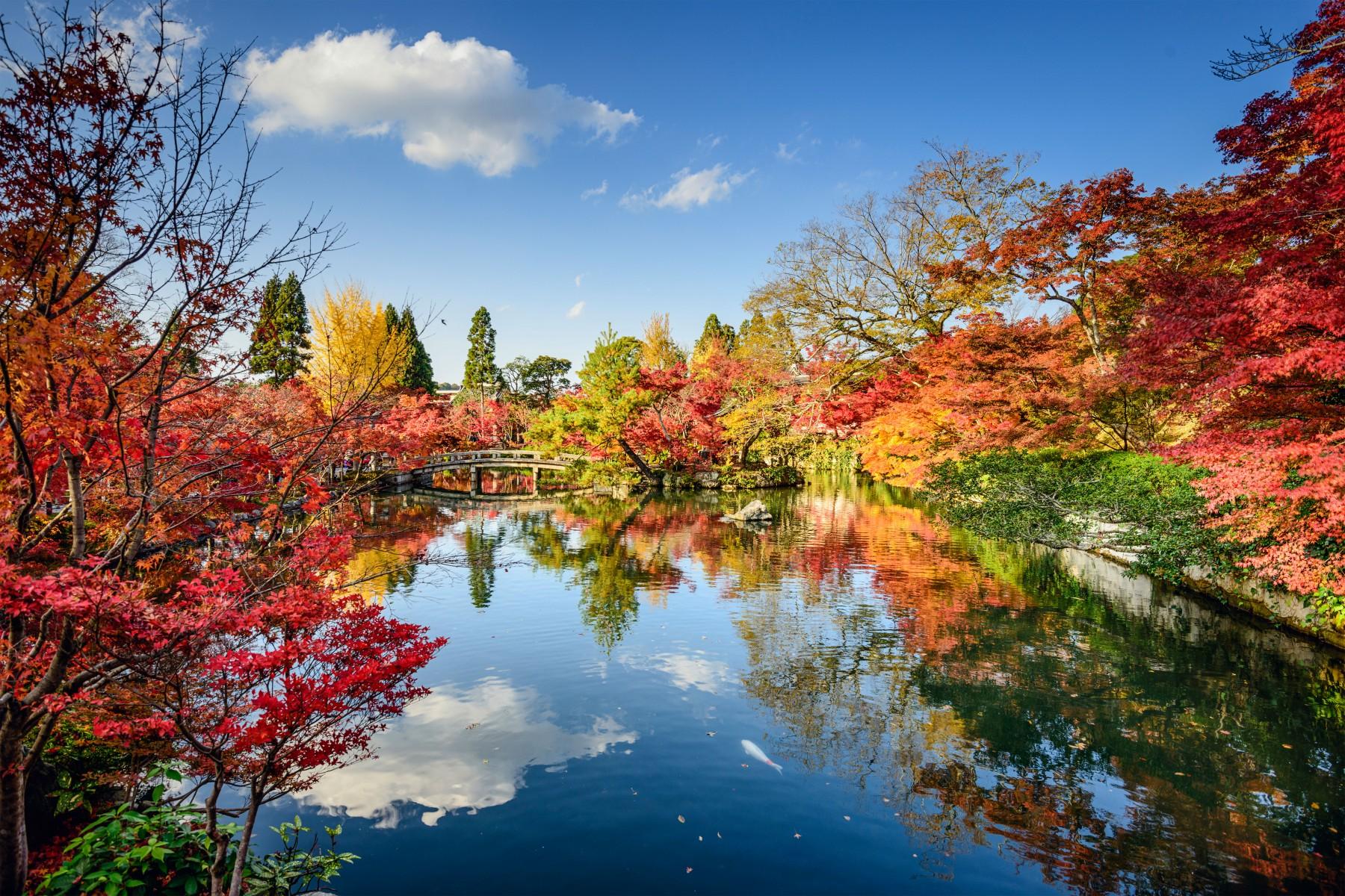 Free Desktop Wallpaper Niagara Falls Naturgenuss Im Goldenen Herbst