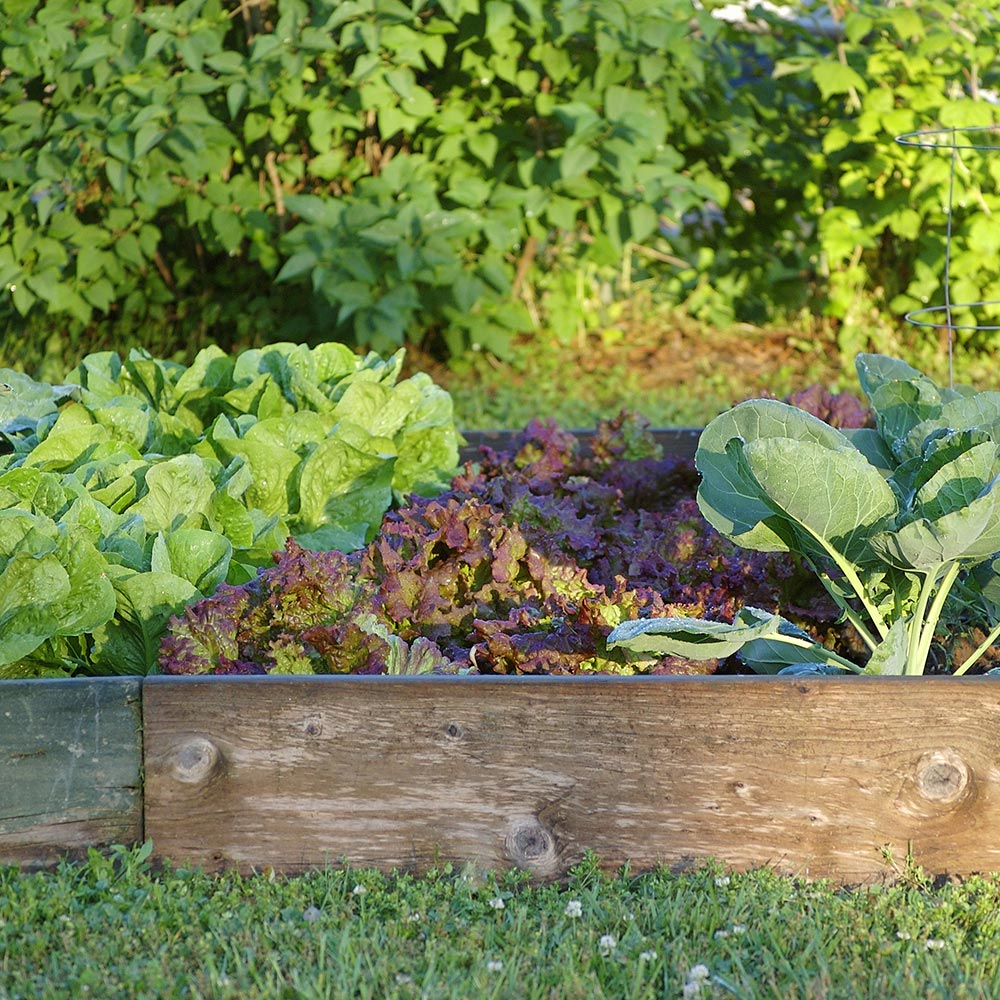 Ideas And Tips For Your Raised Garden The Home Depot
