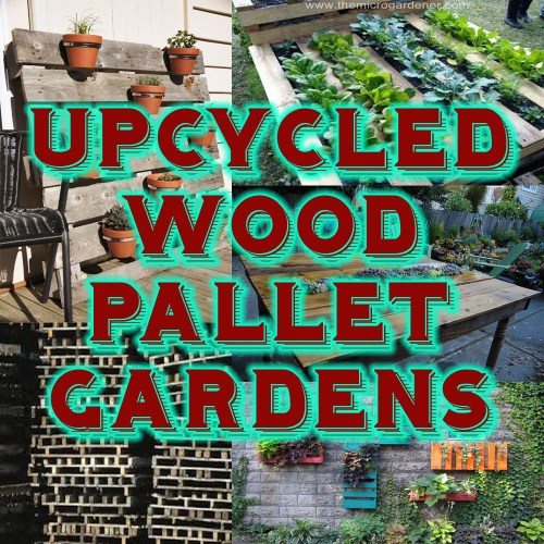 Medium Of Pallet Gardens Images