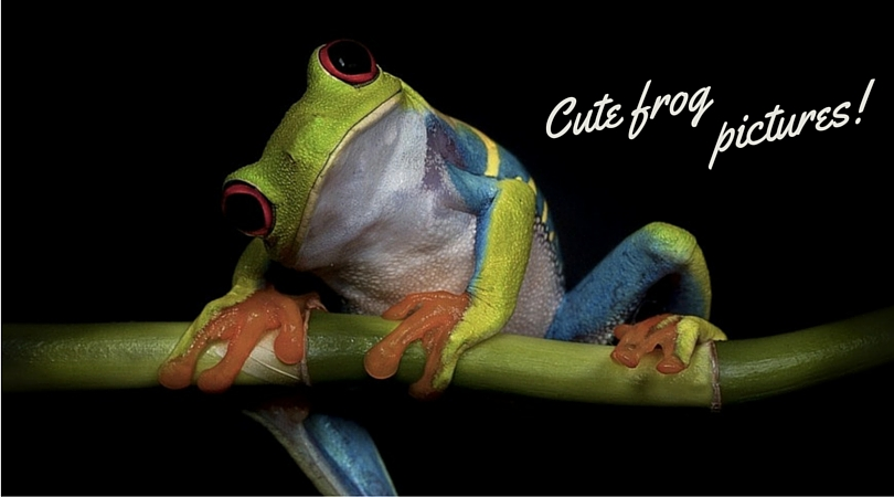 Cute Anchor Wallpapers Cute Frog Pictures