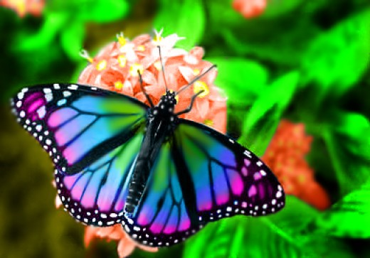 Amazing 3d Peacock Wings Wallpapers 75 Beautiful Butterfly Pictures