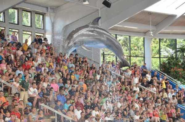 Brookfield Zoo Dolphin Show 115