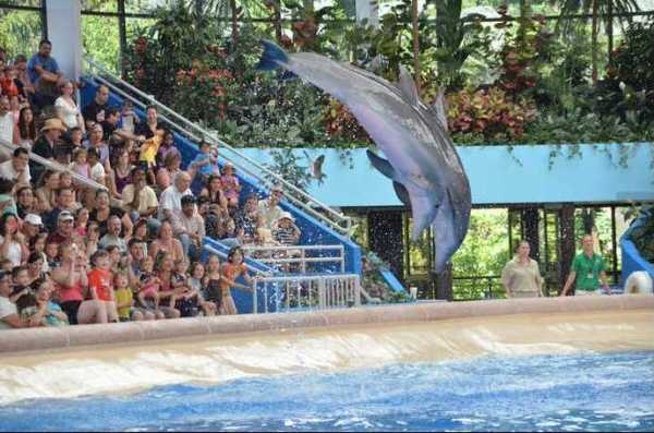 Brookfield Zoo Dolphin Show 123