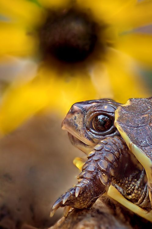 Fantastic Wallpapers With Quotes 20 Super Cool Pictures Of Turtles