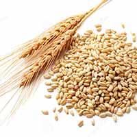 trigo-coques-susana