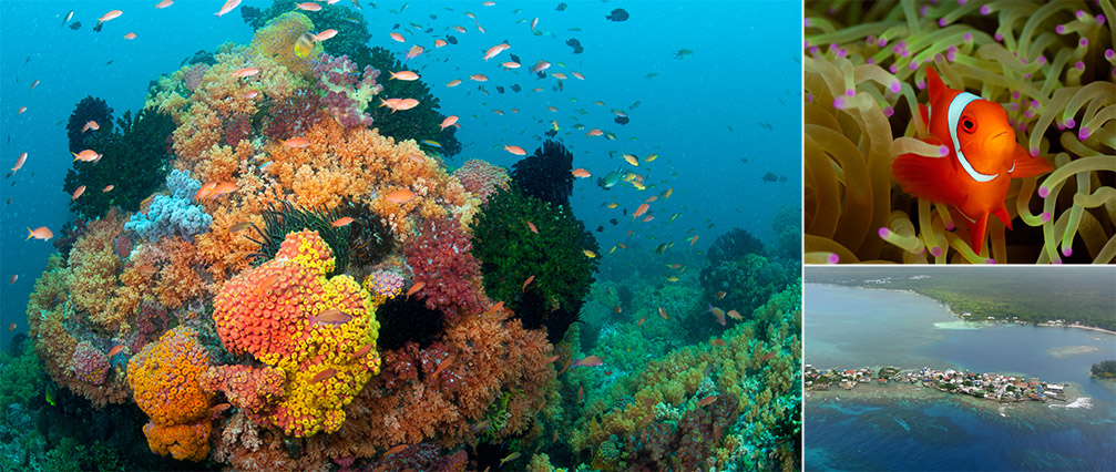 Wallpaper Dolphin 3d Coral Reefs 101 Coral Reef Alliance