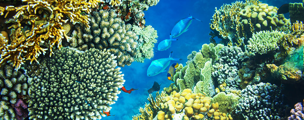 Science of Adaptation Coral Reef Alliance