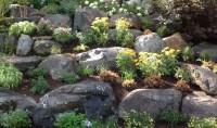 Rock Gardens - Cording Landscape Design