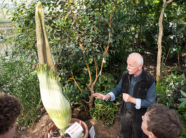 Prof Karl Niklas talks about the Titan Arum
