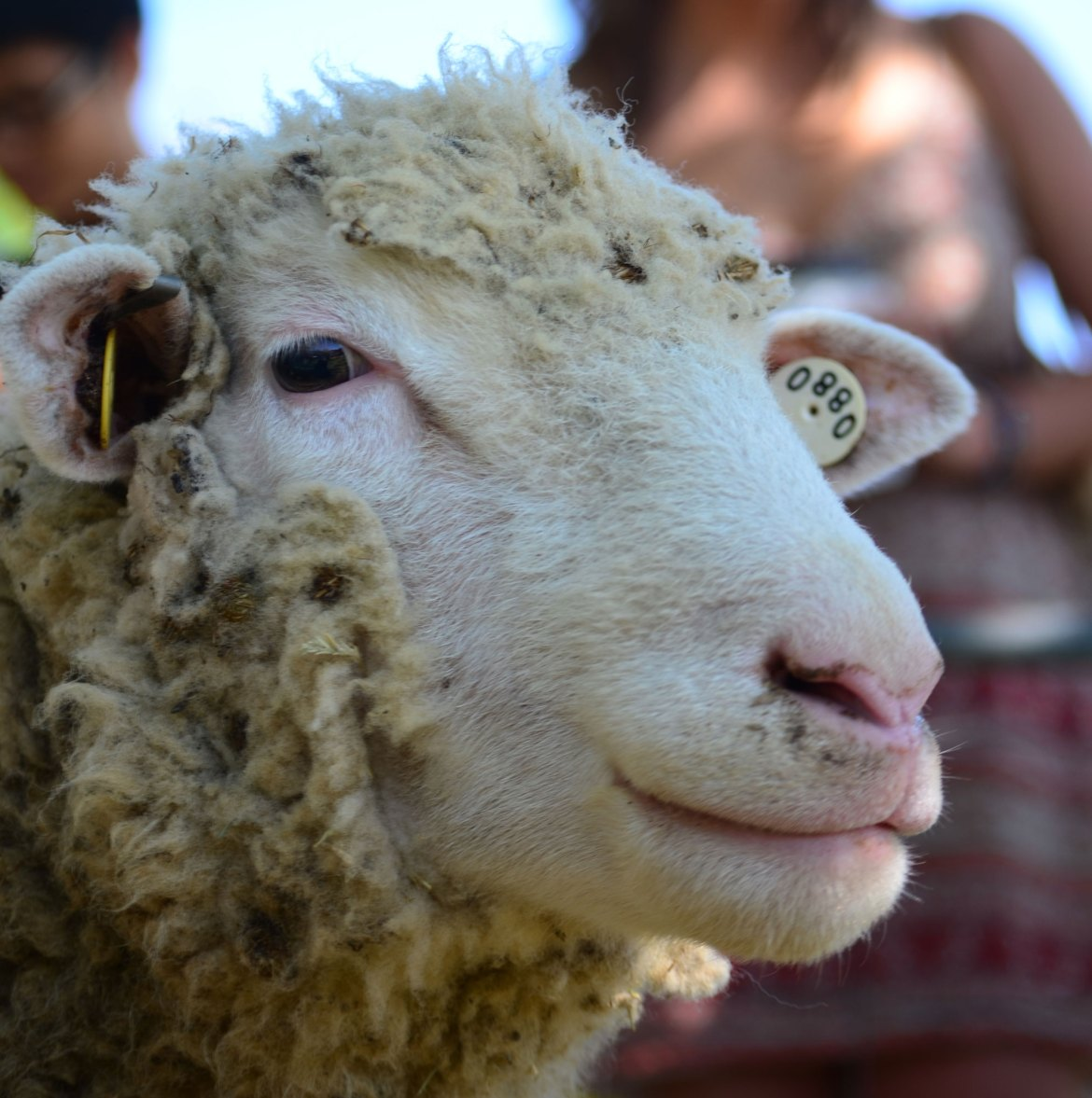 The first CALSDay will bring a variety of festivities to the Agricultural Quad on Friday.