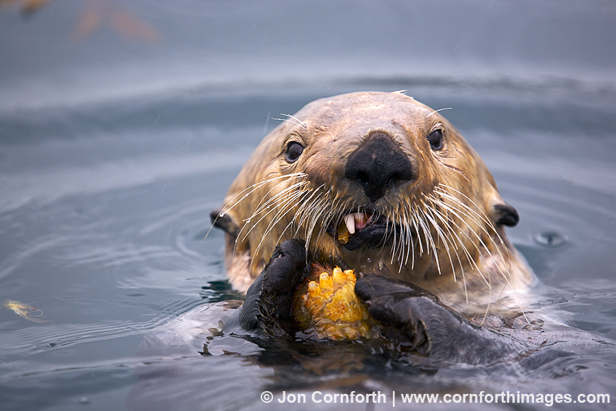 Cute Baby Dolphin Wallpaper Fern Harbor Sea Otter 30 Blog Cornforth Images