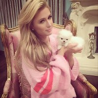 Paris Hilton's new puppies 'cost $25000' but are ...