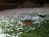 Snow, grass and brick