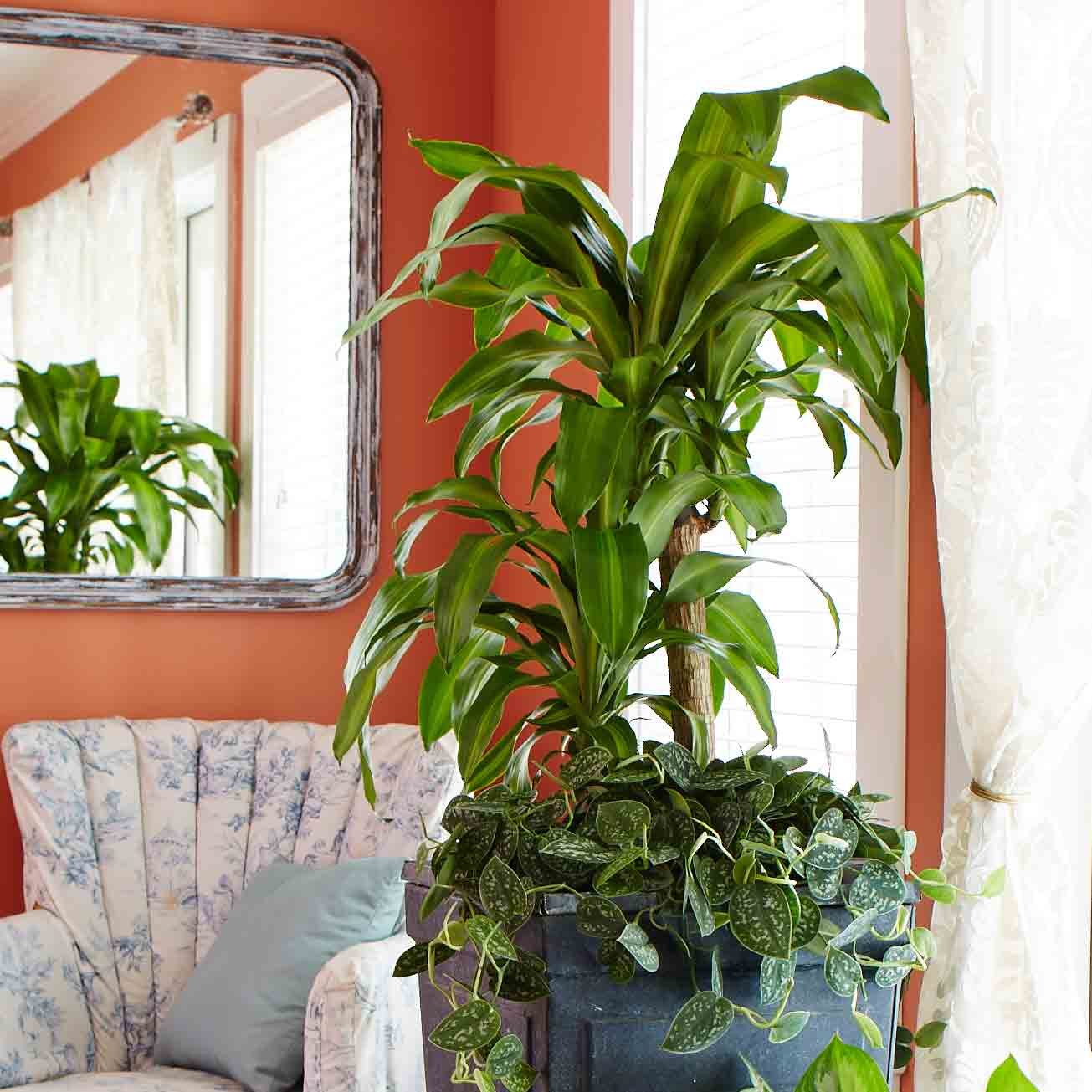 Good Large House Plants 10 Best Low Light Houseplants Costa Farms