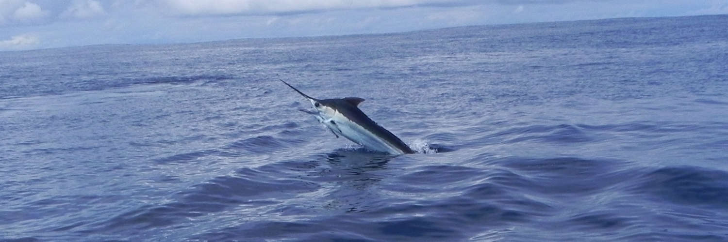 Best Places for Deep Sea  Inshore Sport Fishing in Costa Rica