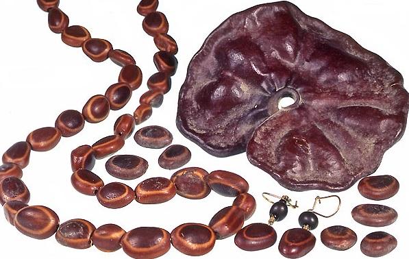 Guanacaste Seeds