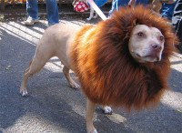 Lion Dog Costume | Costume Pop