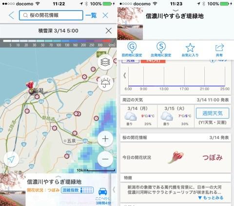 Yahoo!JAPAN 桜開花情報2016