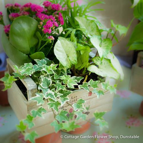 Cottage Garden Flower Shop - Dunstable, Central ...