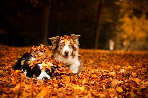 Cute Algae Wallpaper 17 Dogs Who Can T Get Enough Of Autumn Cottage Life