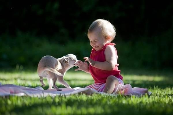 un bébé est surpris par un bébé chien