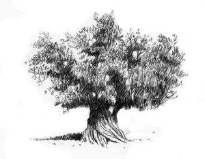 oak-tree-final 80th