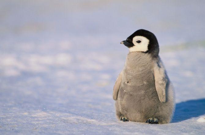 Cute Baby Feet Wallpaper A Peek At Penguin 4 0 Counterintuity