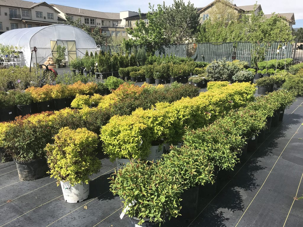 Trees And Shrubs Trees And Shrubs In Denver Co