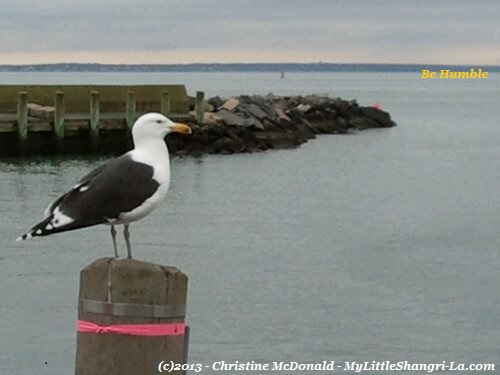 Seagull-Be-Humble