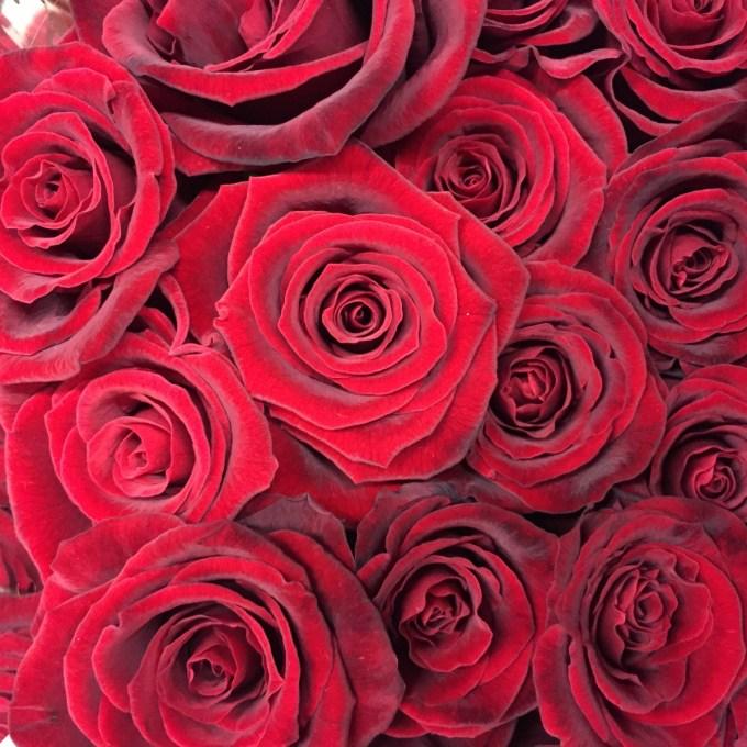 Red grand prix roses