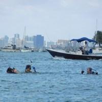 Plongée sous-marine et snorkeling en Floride