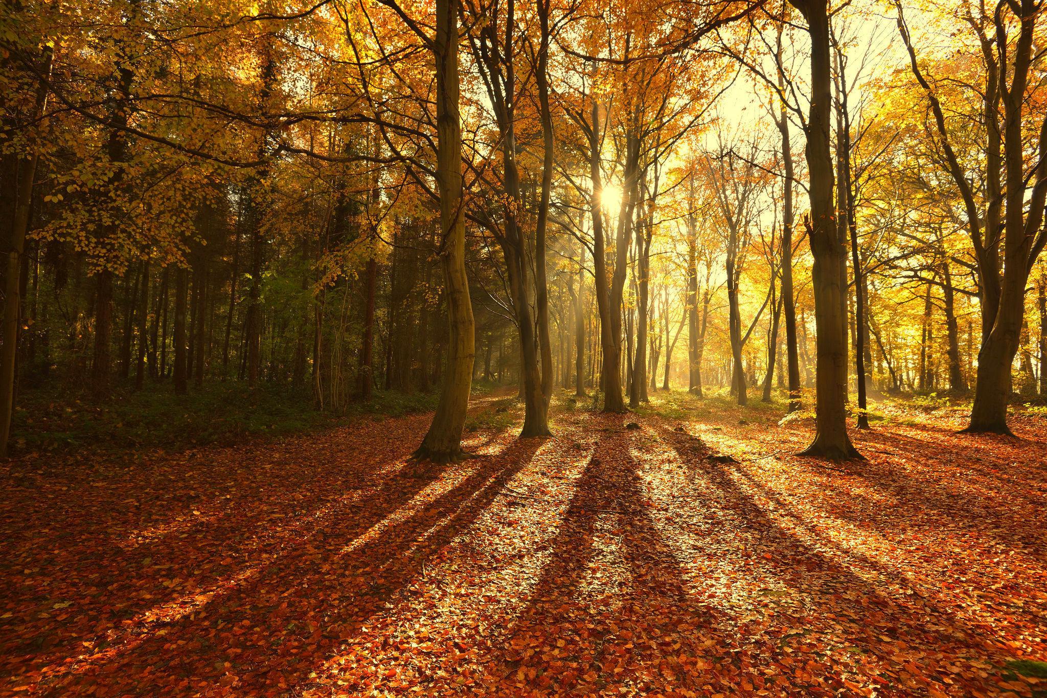 Fall Woods Wallpaper Cours Du Mardi Et Du Vendredi Apr 232 S Midi Le Paysage