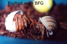 photo of Big Red with BFG by Vanessa