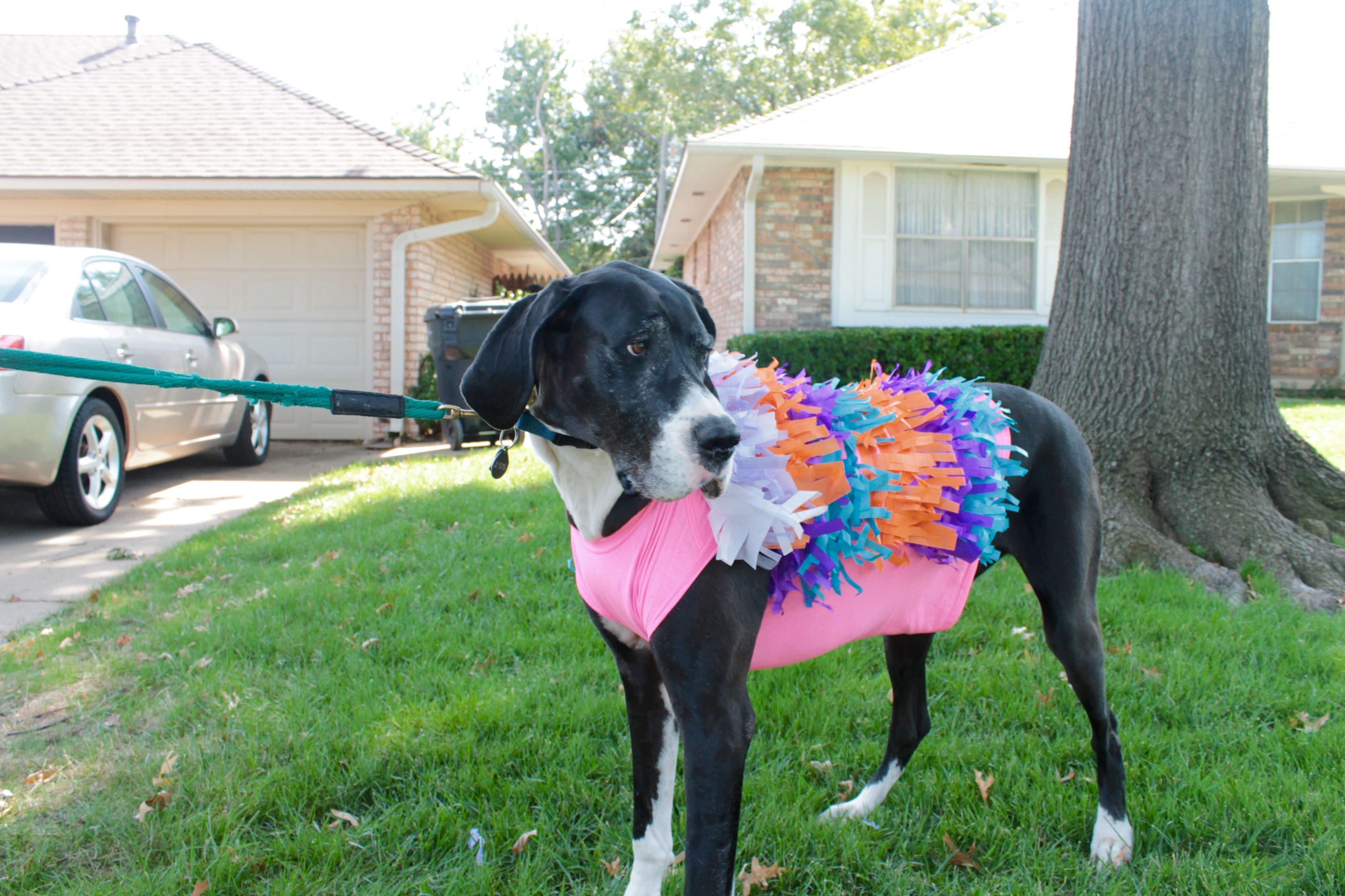 After scouring Pinterest for the best Halloween costumes (for Humans u2013 did I mention my dogs are as big as people?) I decided on two Halloween Costumes ... & Quick and Easy Dog Halloween Costume