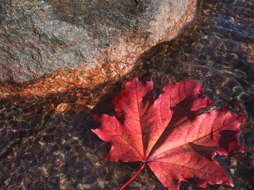 Maple & Rose Geranium Cleanser
