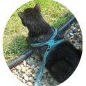 Crochet Cat Leash