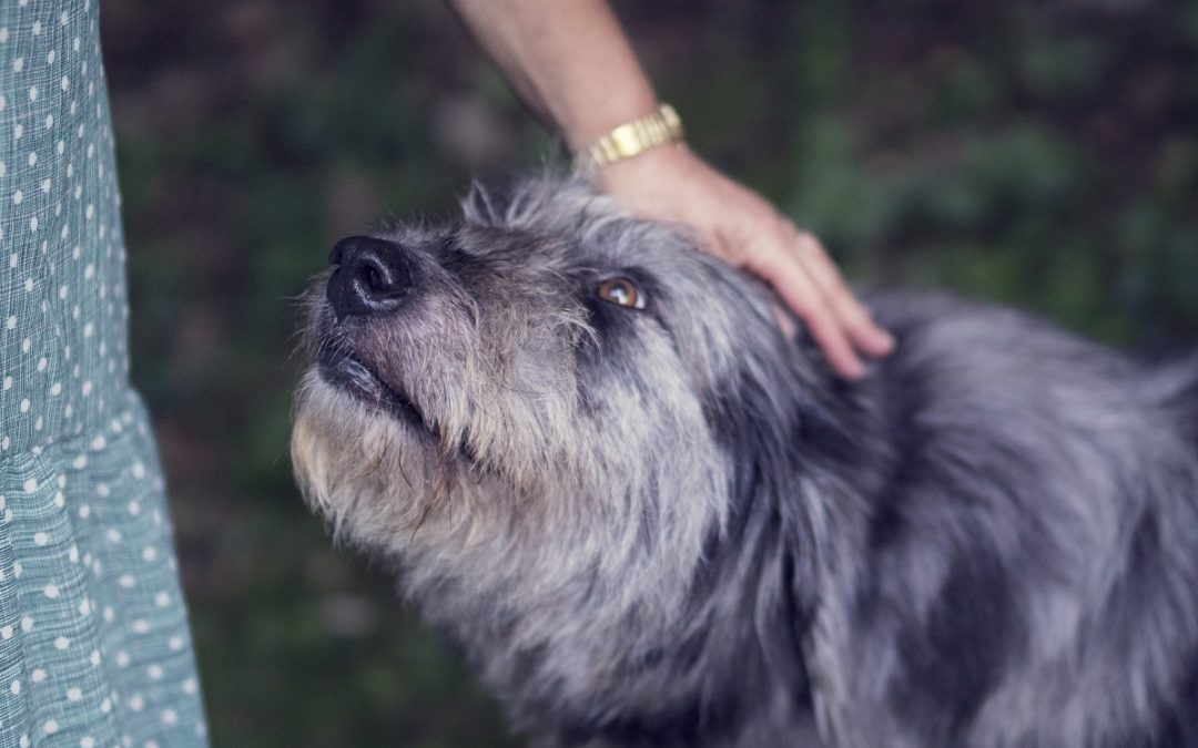 A Trust for Fluffy or Fido?