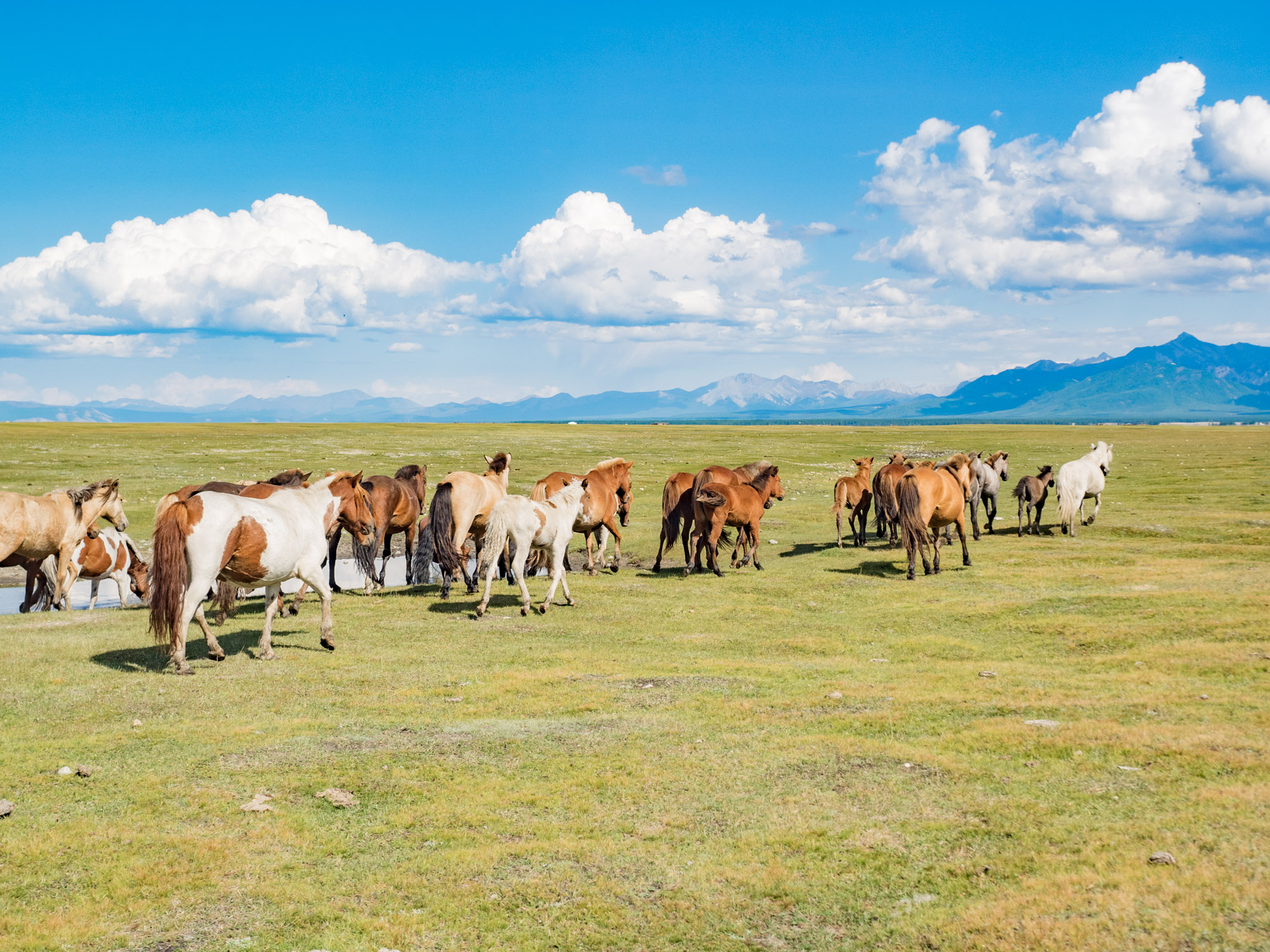 Travelling Mongolia Blog The Backpacker S Guide To Independent Budget Travel In