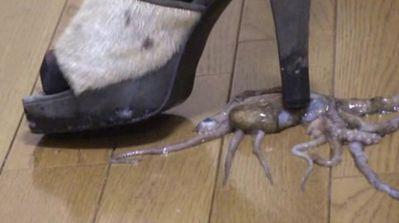 出た!動く活きタコを厚底靴のヒールで踏み抜き生き物クラッシュ!