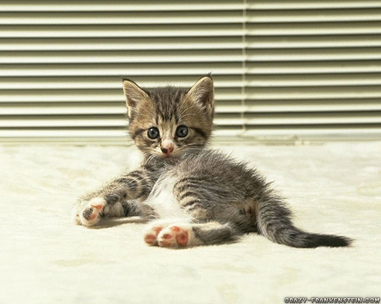 Cute Kitty Wallpapers Download Cute Animals Wallpapers Page 2 Crazy Frankenstein
