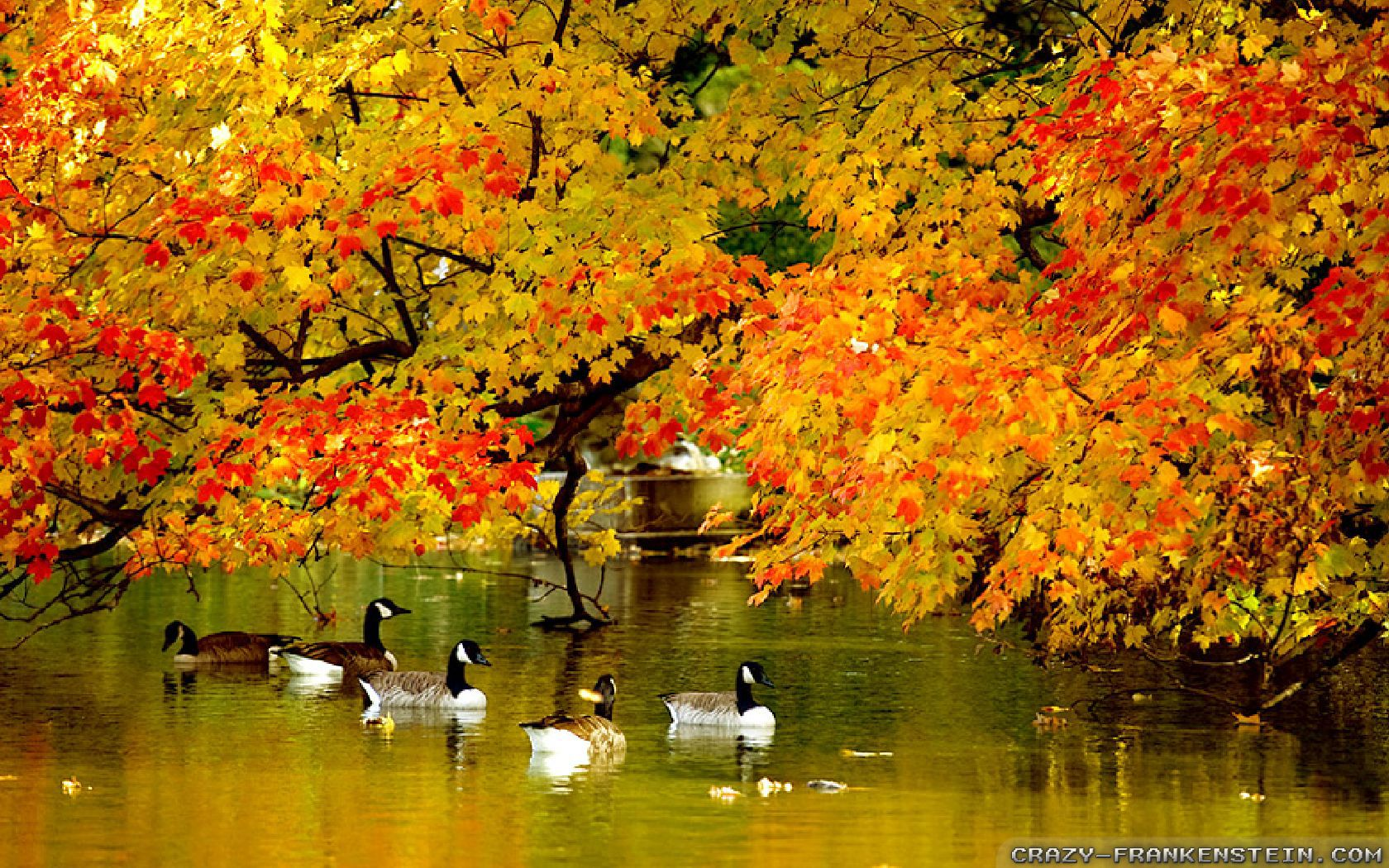 Fall Scenery Wallpapers Free Autumn In New York Wallpapers Seasonal Crazy Frankenstein