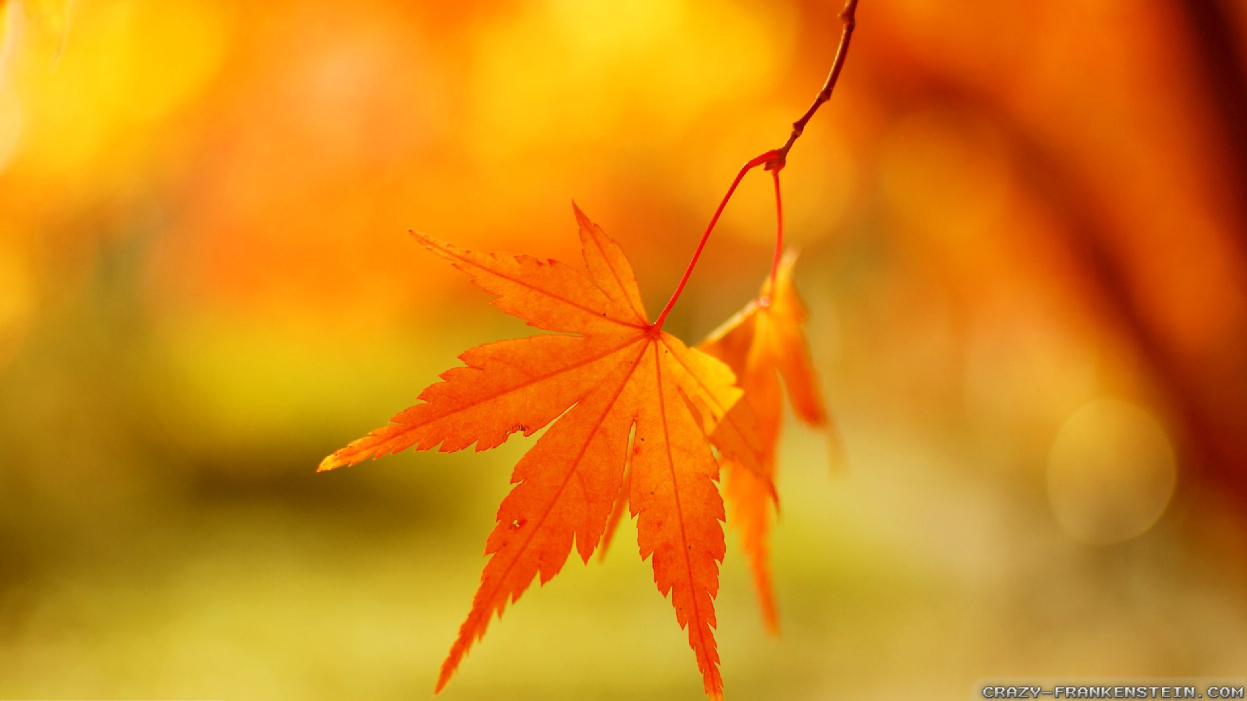 Fall Of The Leafe Wallpaper Autumn Leaf Wallpapers Seasonal Crazy Frankenstein