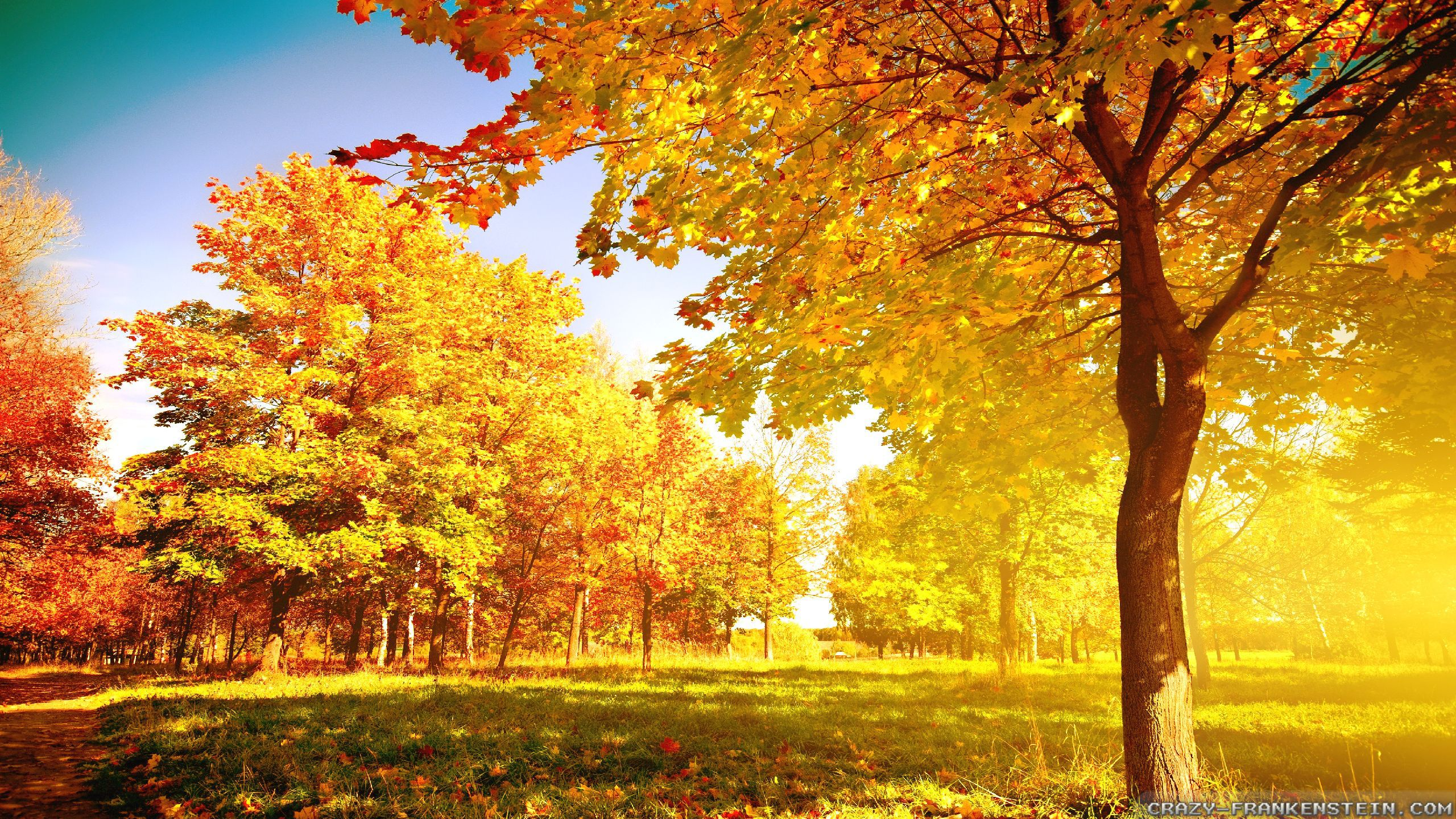 Fall Scenes For Computer Wallpaper Autumn Trees Wallpapers Seasonal Crazy Frankenstein