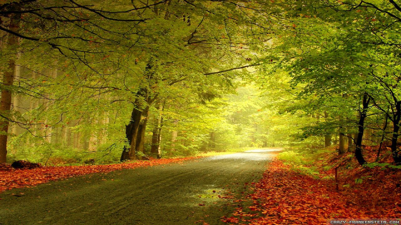 Fall Nature Scenes Wallpaper Autumn Woods Wallpapers Seasonal Crazy Frankenstein