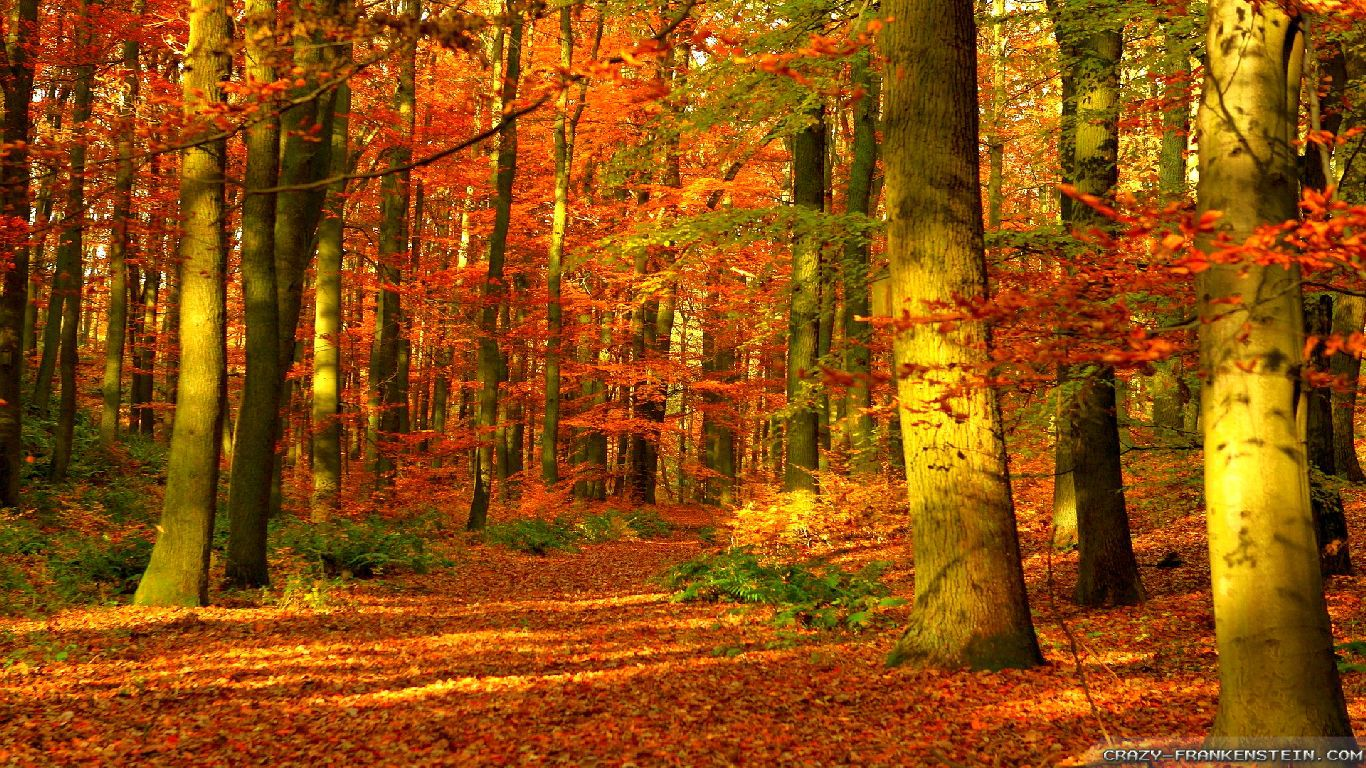 Fall Leaves Hd Desktop Wallpaper Autumn Woods Wallpapers Seasonal Crazy Frankenstein