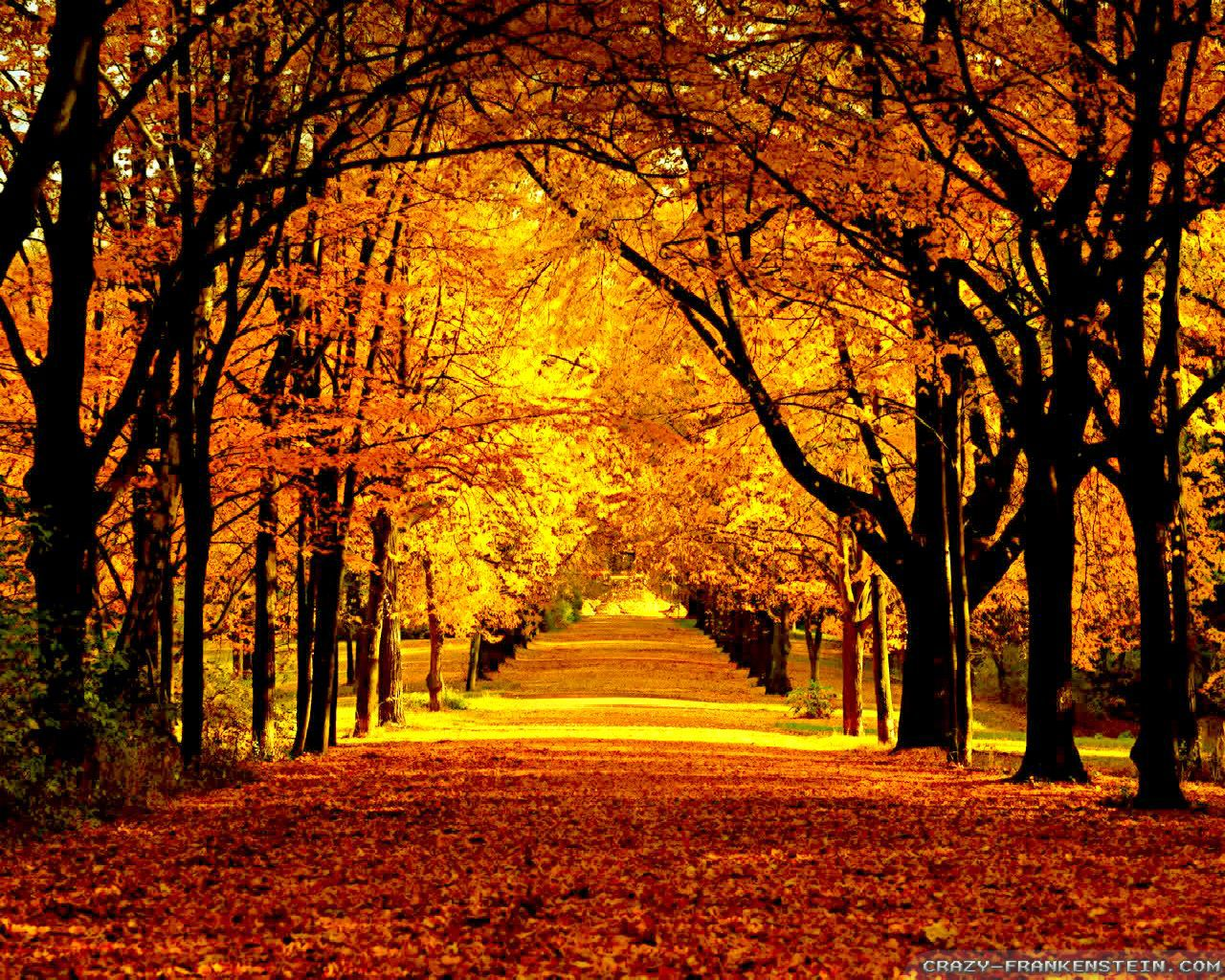 Free Fall Wallpaper For Phone Beautiful Autumn Wallpapers 2 Seasonal Crazy Frankenstein