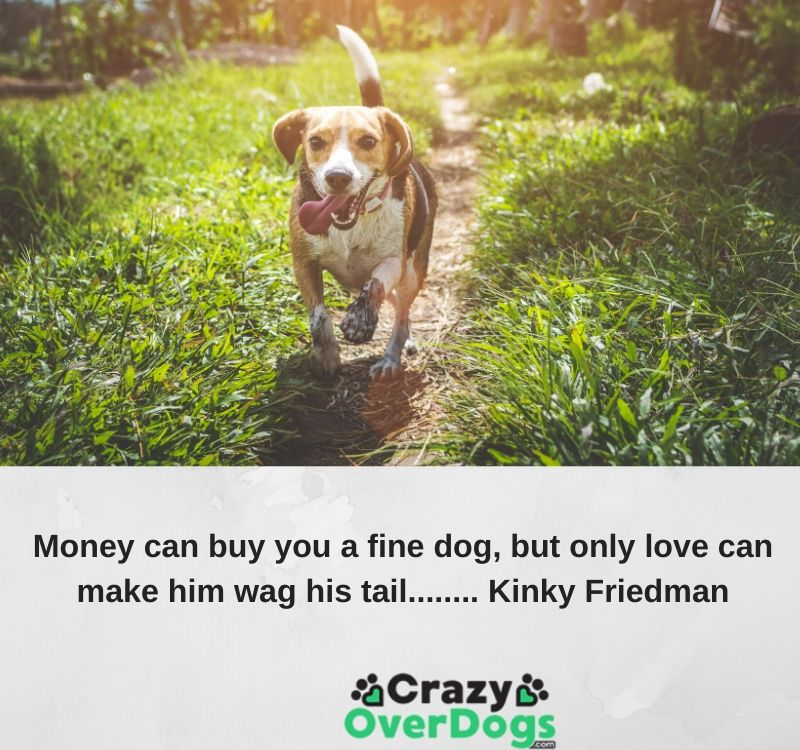 Best Stroller Money Can Buy Money Can Buy You A Fine Dog Kinky Friedman Crazy